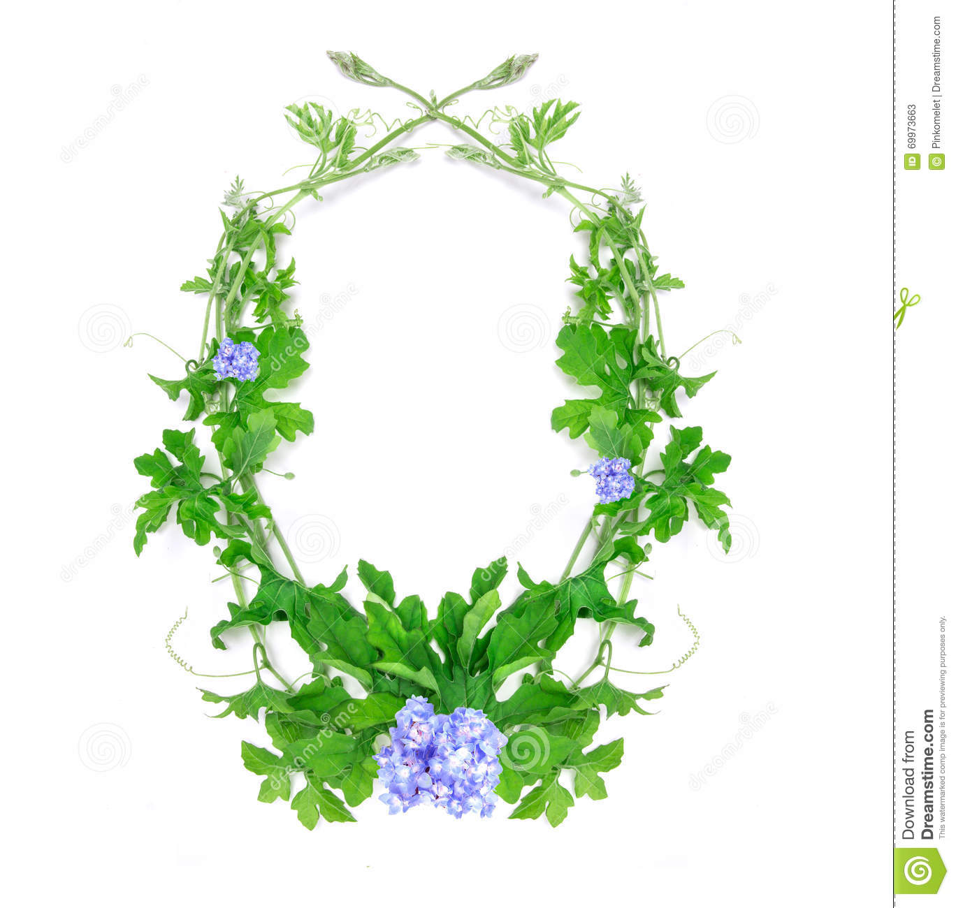 Green creeping plant leaf with blue flower arrangement as frame download green creeping plant leaf with blue flower arrangement as frame stock image image of izmirmasajfo