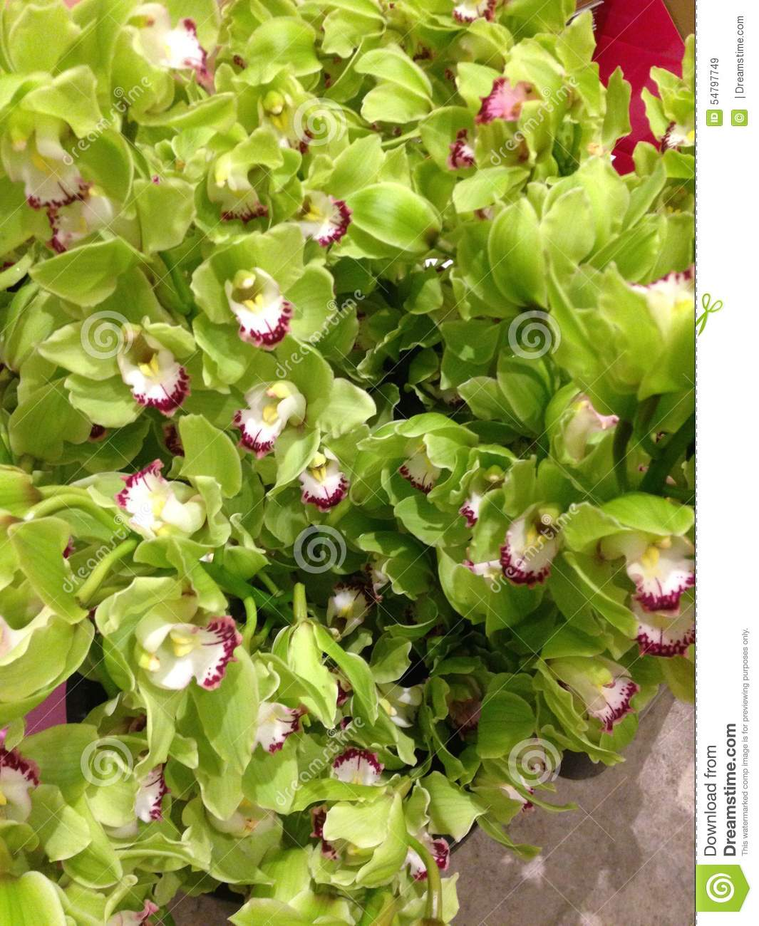 Remove Leafless Pseudobulbs The Pseudobulb Is A Thickening At Base Of Stem Each Bulb Will Develop Between One And Twelve Leaves Flower Bud