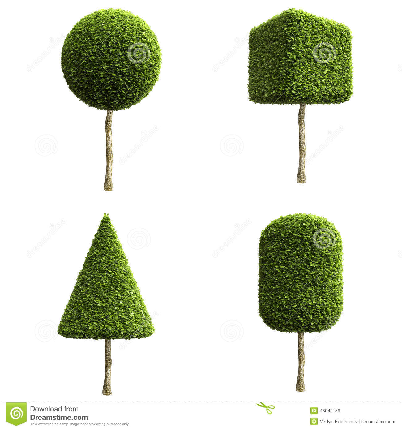 Green Decorative Shrubs Or Trees Stock Illustration Image 46048156