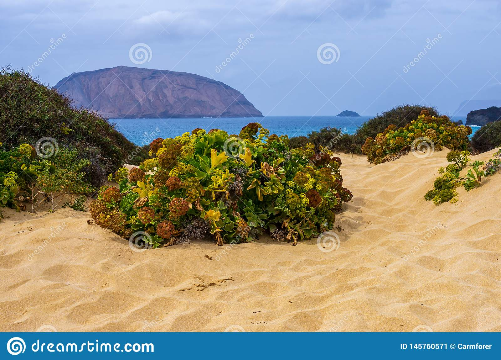Green desert plant on the beach sand