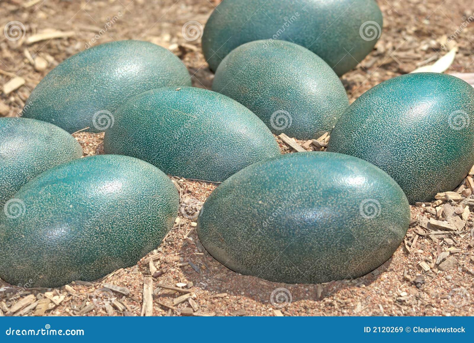 Eggs expiration date in Australia