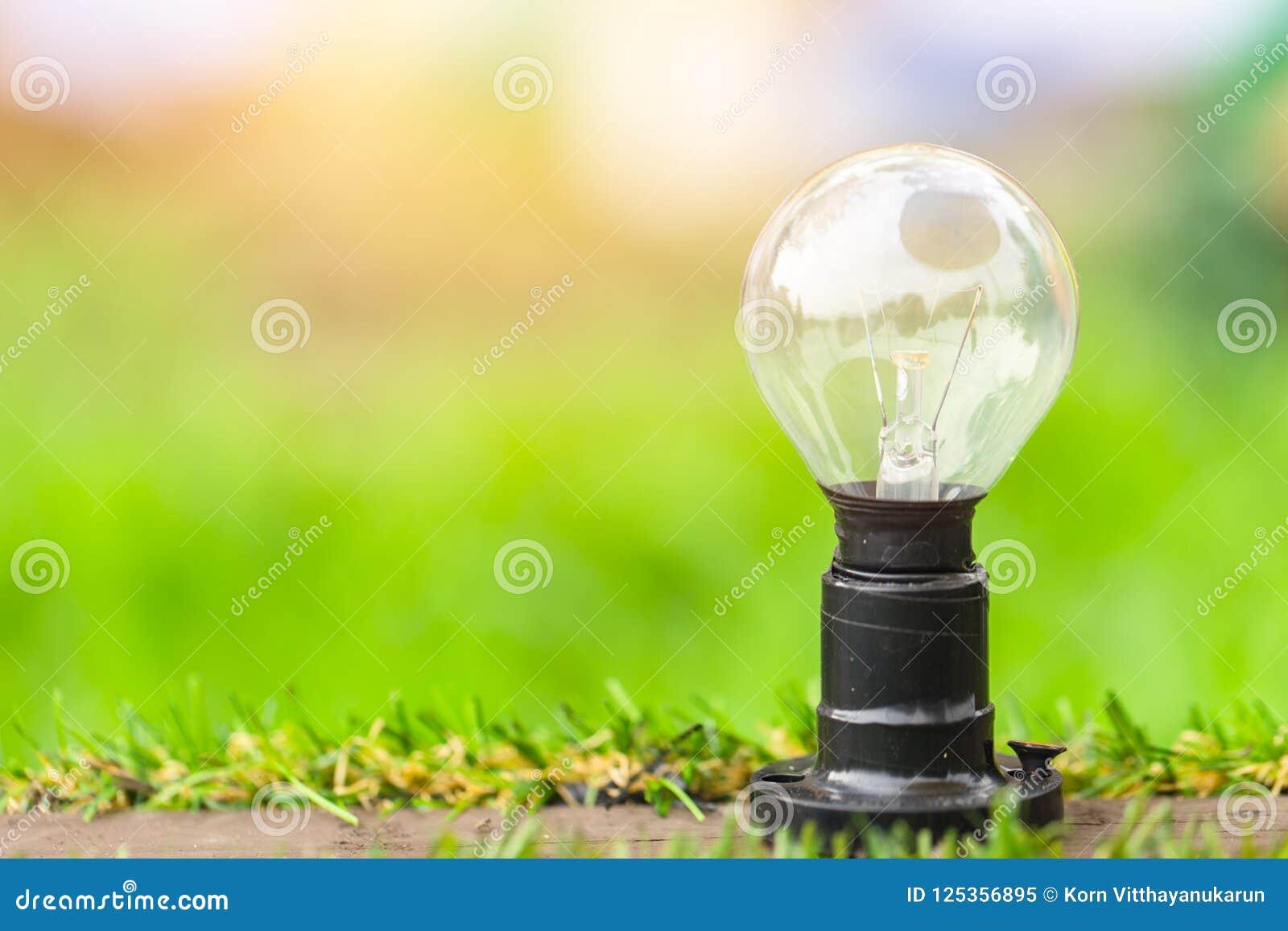 Green energy concept light bulb on grass field