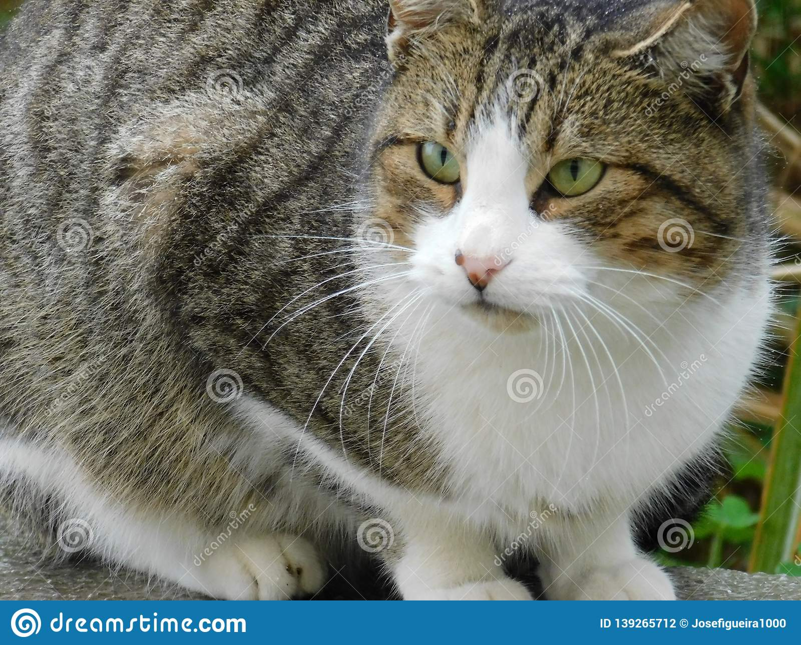 Green eyes cats stock photo. Image of decoration, cats
