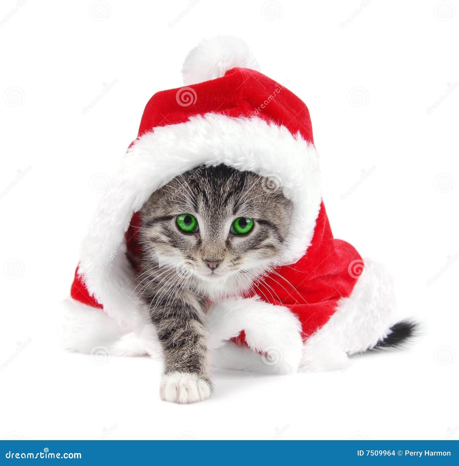 free christmas kitten clipart - photo #27