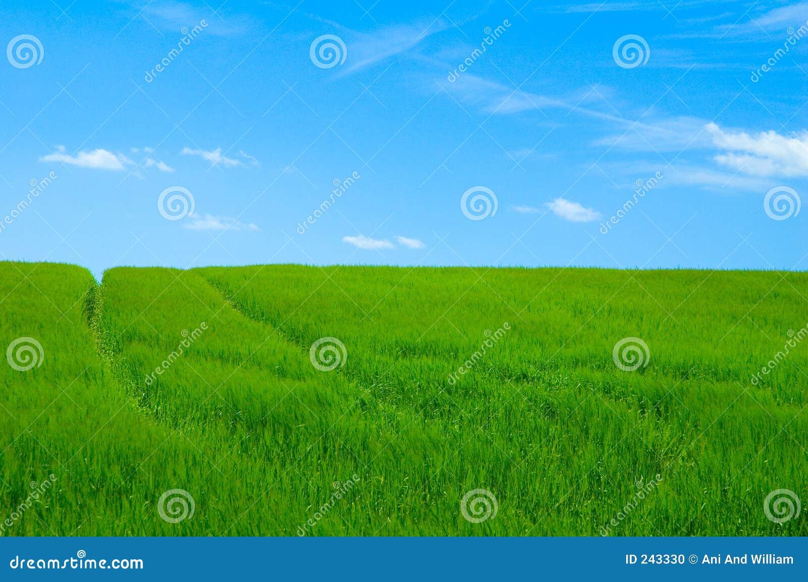 Green för 2 fält