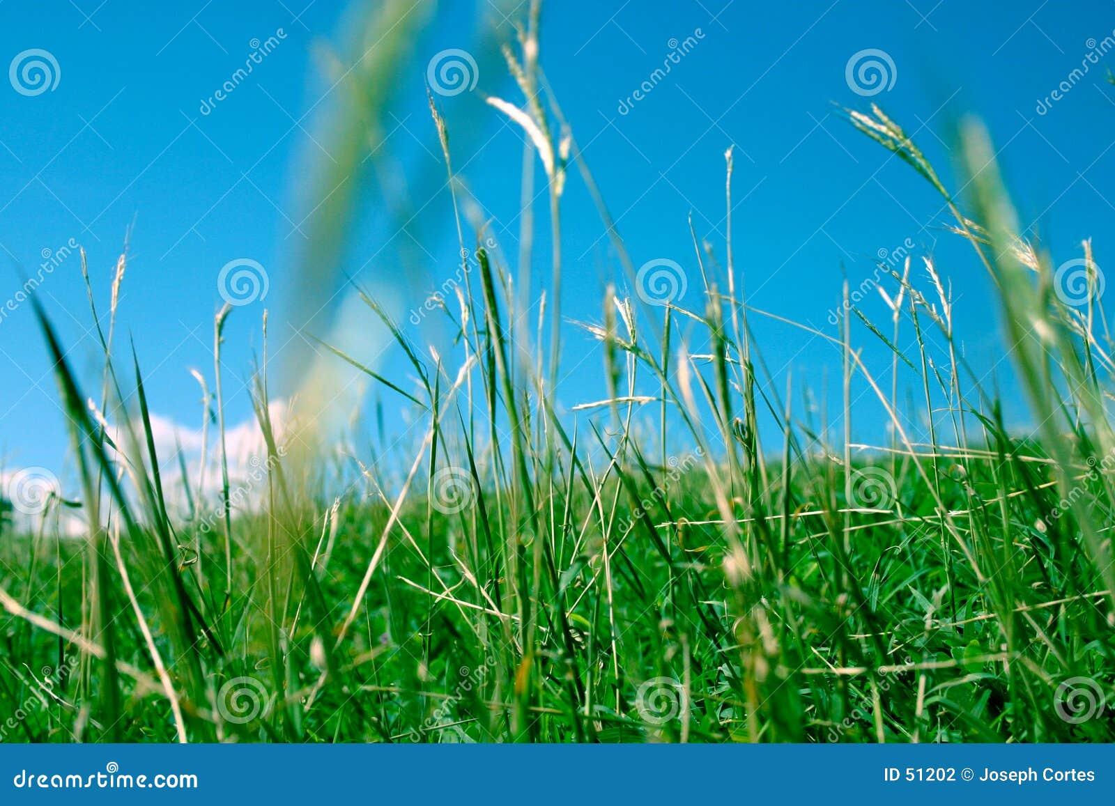 Green för 2 gräs