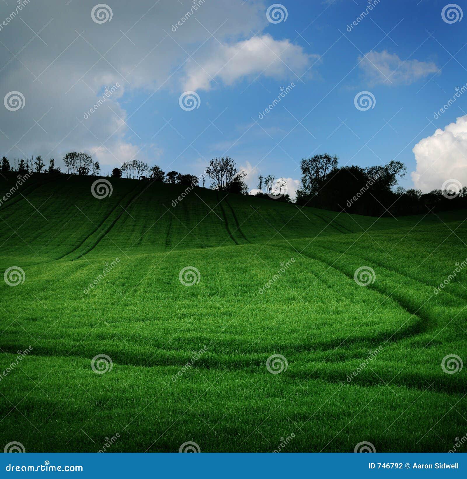 Green för mörkt fält