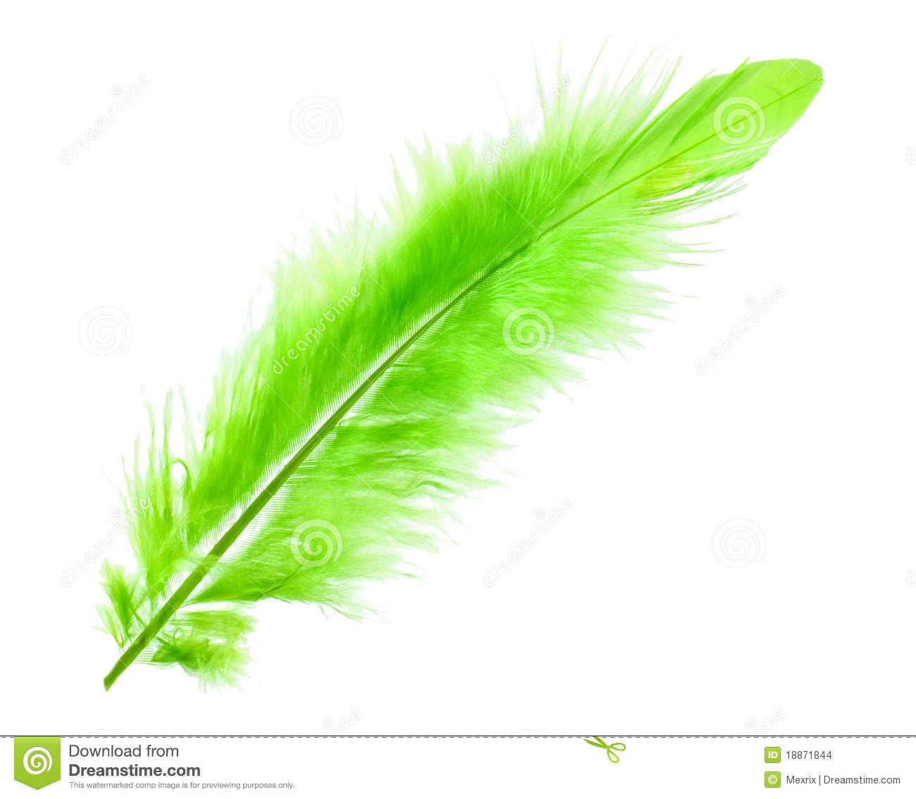 Green Feather Stock Images Image 18871844