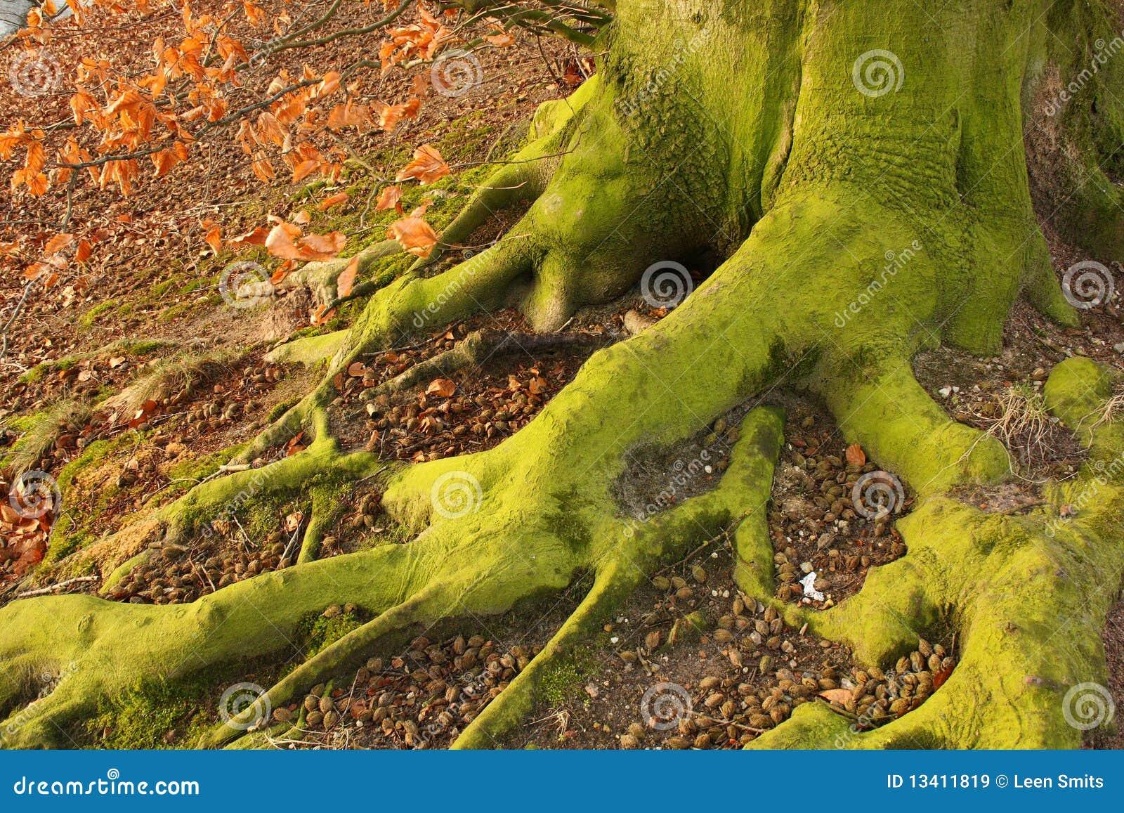 Green Feet