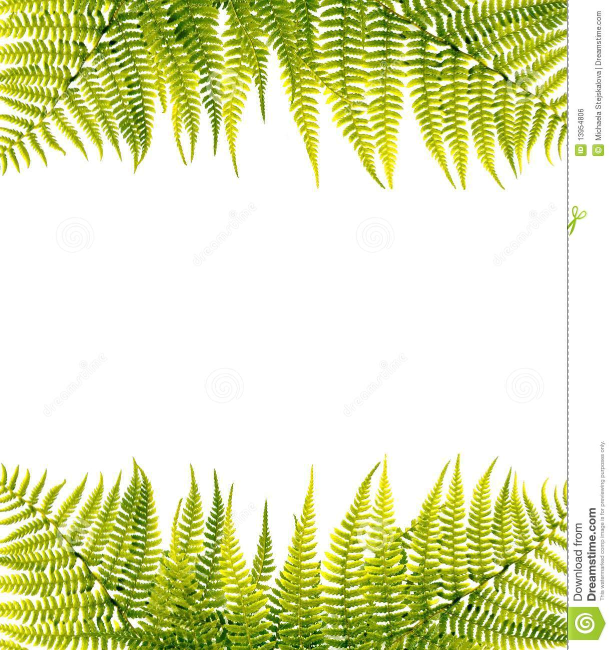 Green Border Green fern border, isolated on