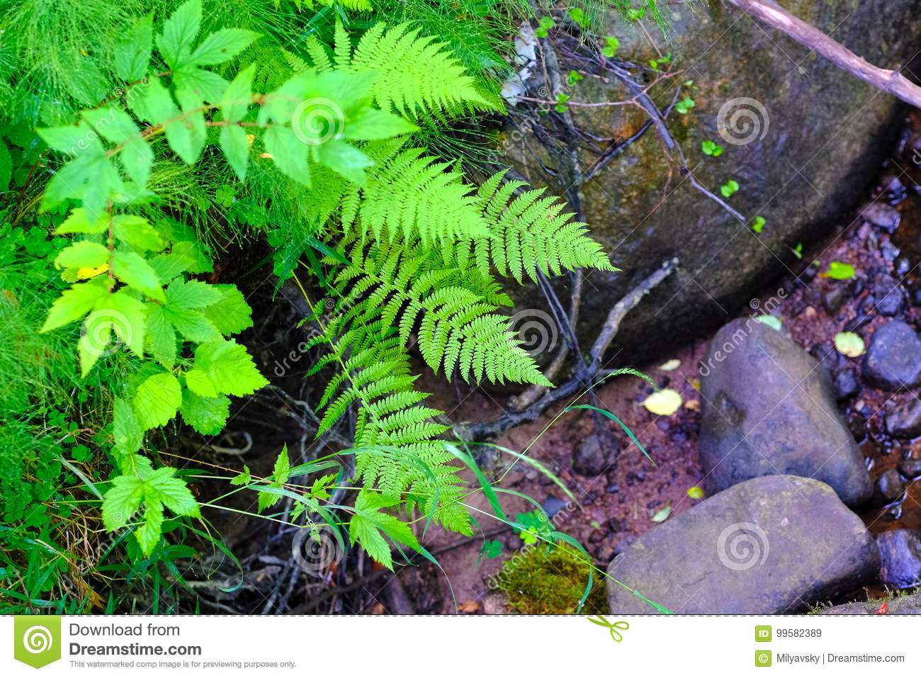 Green, fern and wet stones
