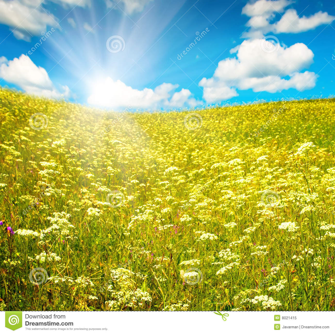Green Field With Blooming Flowers And Blue Sky Royalty