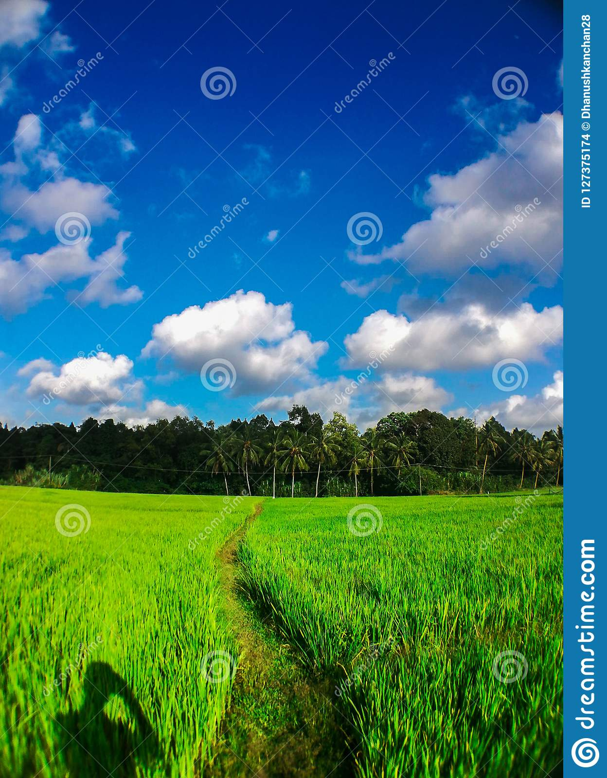 Alone boy shadow in those colourful green field the path to those blue cloudy sky