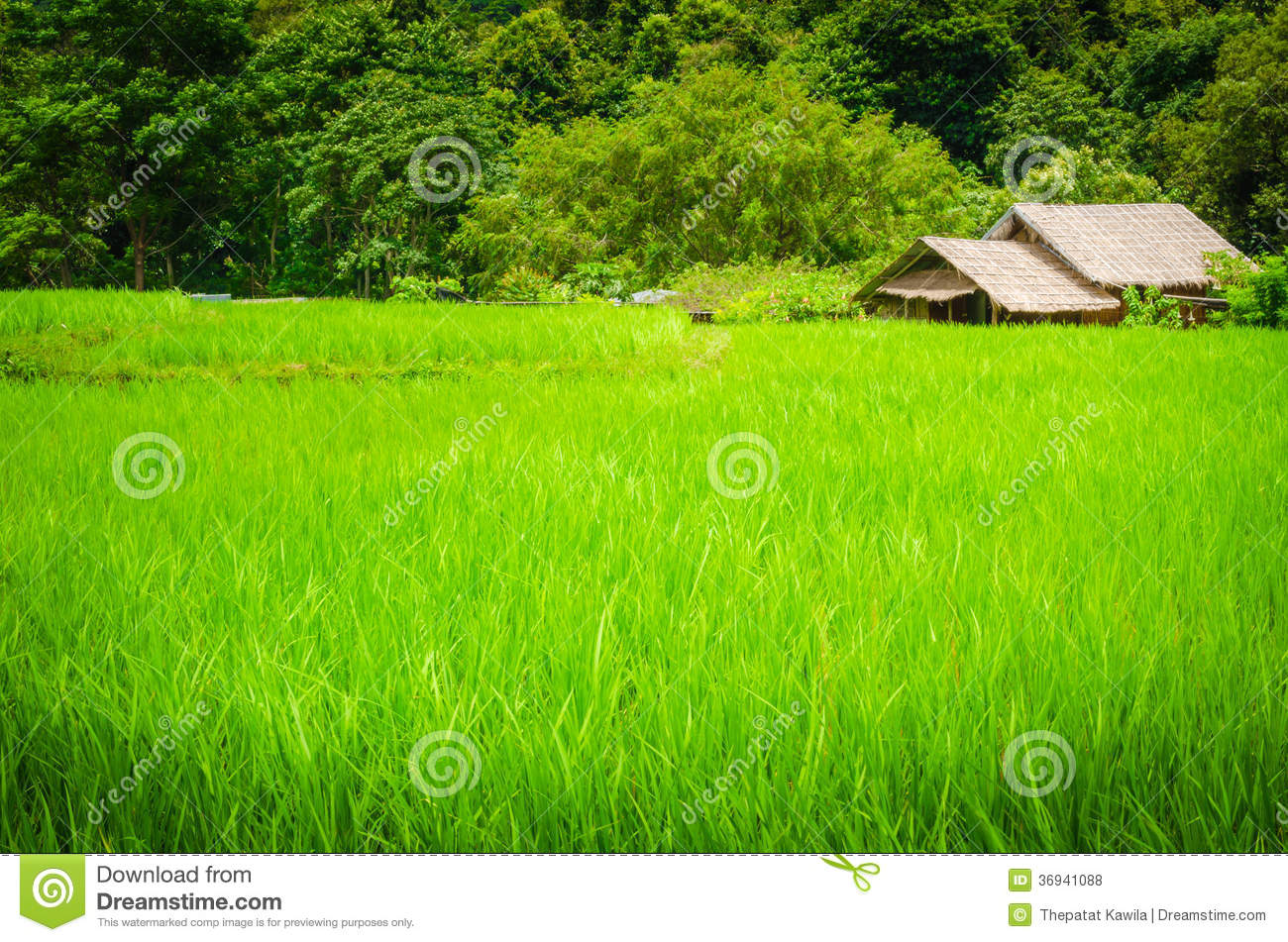 Green Field And A Cottage Stock Photo. Image Of Nature