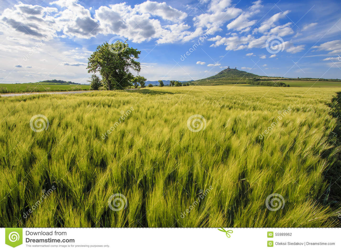 The Green Field Stock Photo