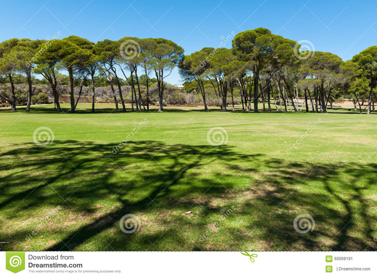 Green Field In The Park Stock Image. Image Of Tree, Plant