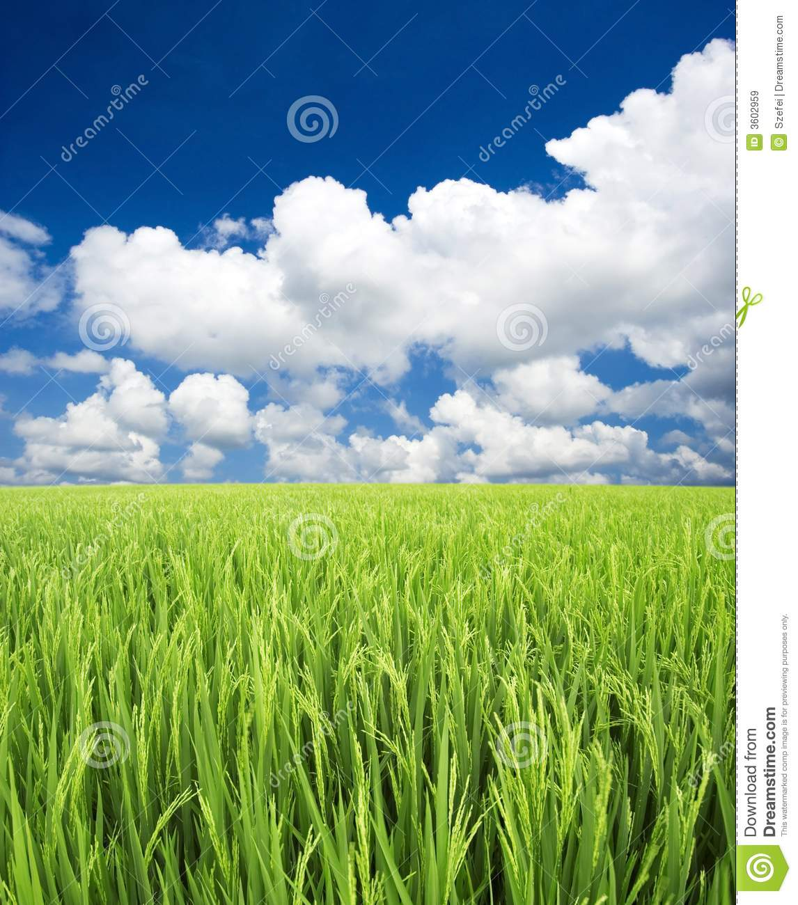 Green field, sky and clouds