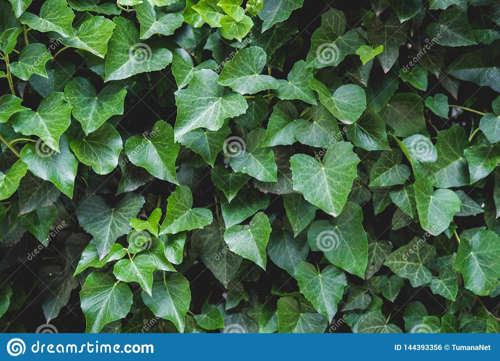 Green floral pattern of leaves. Natural background from above. Top view.