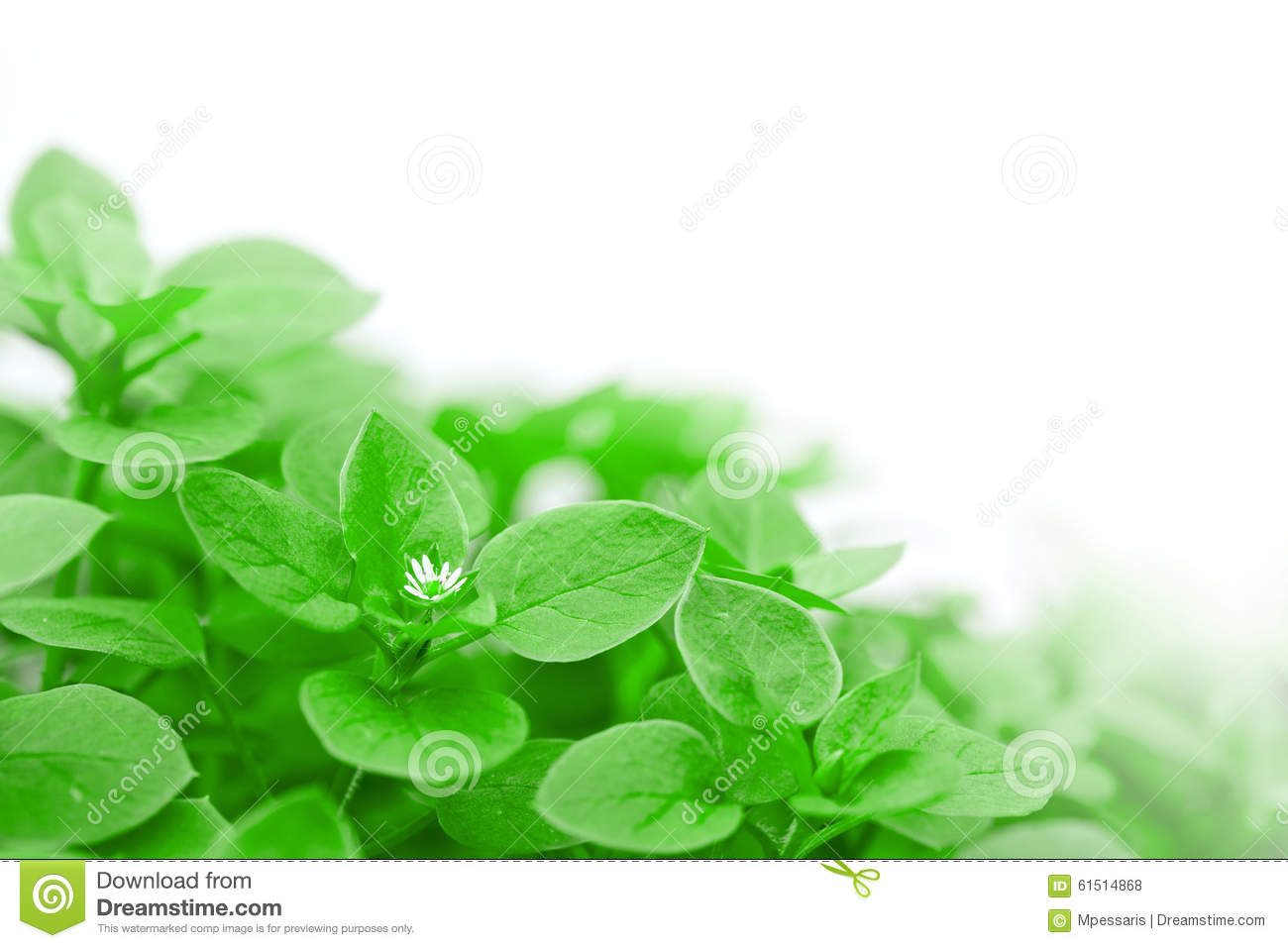 Green flower bed stock photo image 61514868 for Green plants for flower beds