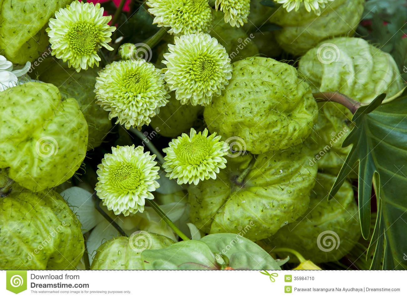 green flower names  flower, Beautiful flower