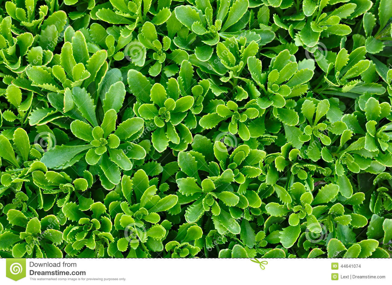 Green flower plants in the garden stock photo image for Green plants for landscaping