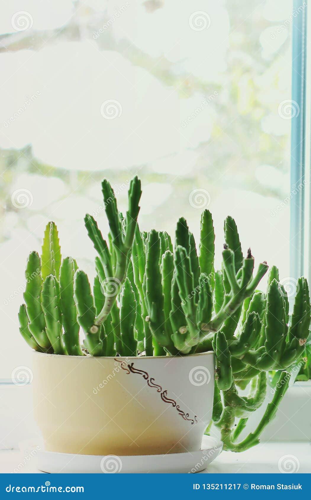 Green flowerpot. Flowers in the house