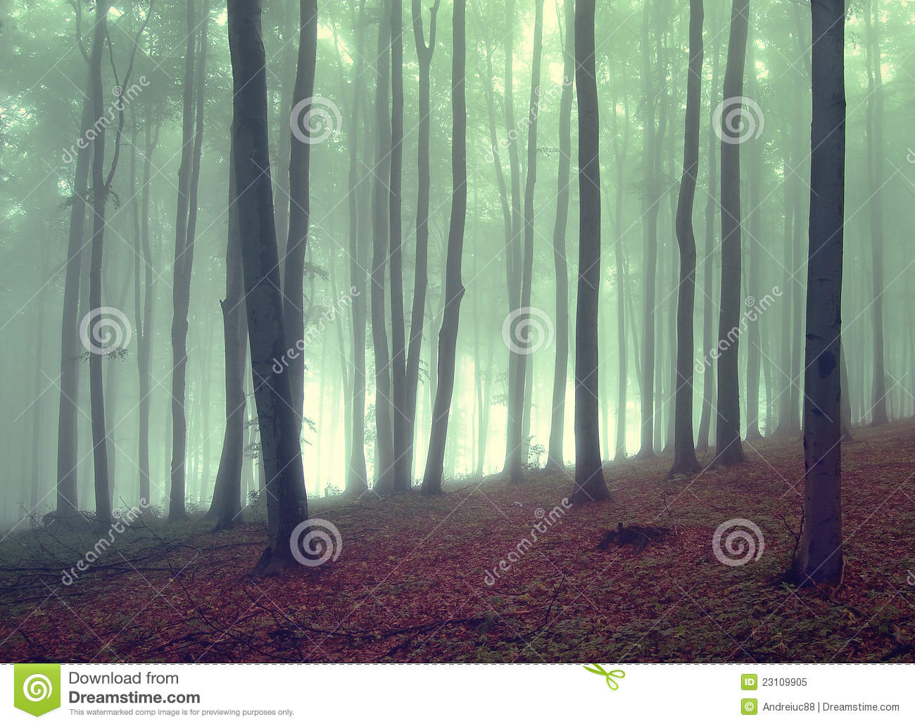 Green fog in a beautiful forest