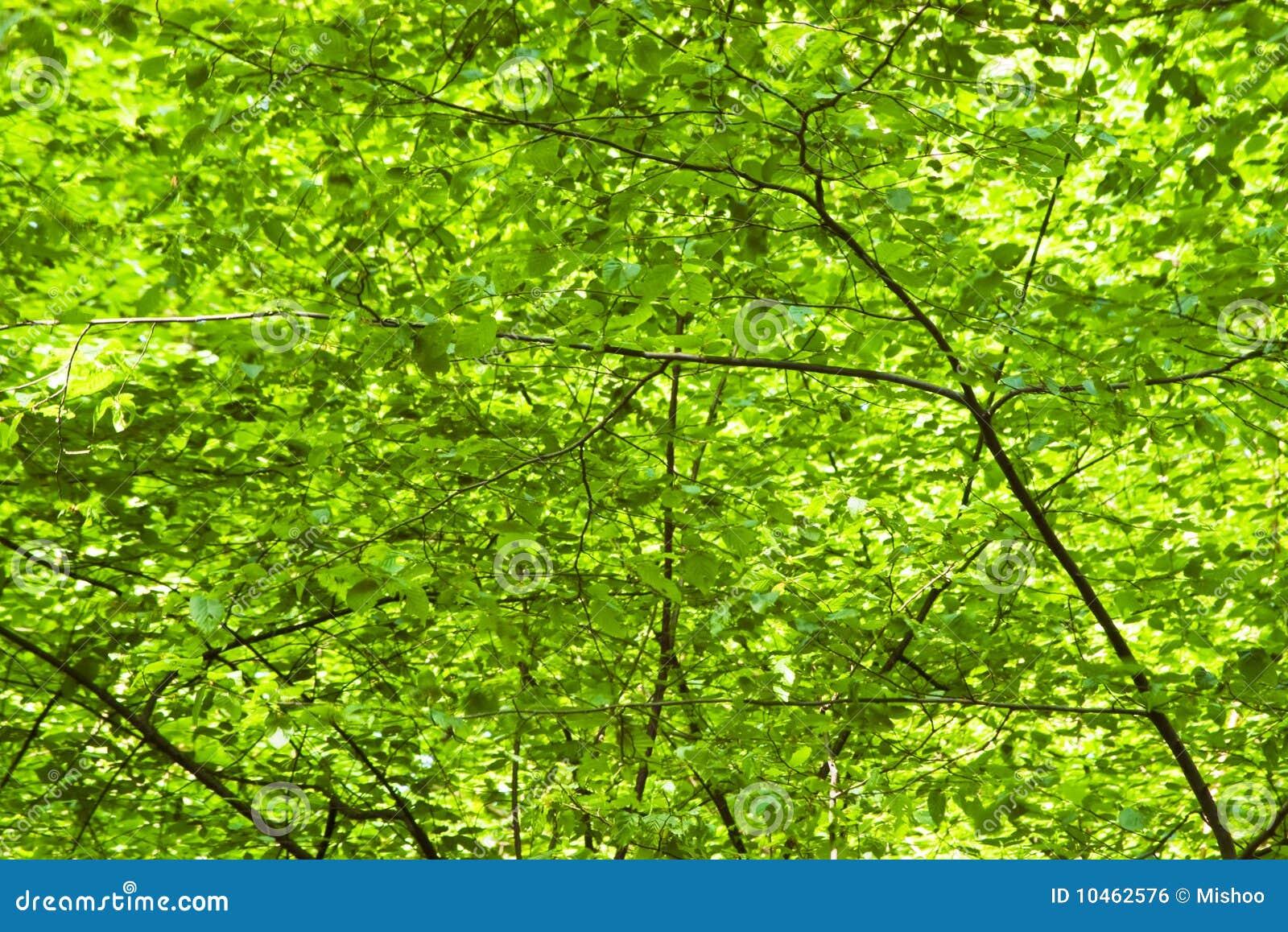Green Foliage Background Royalty Free Stock Image - Image: 10462576