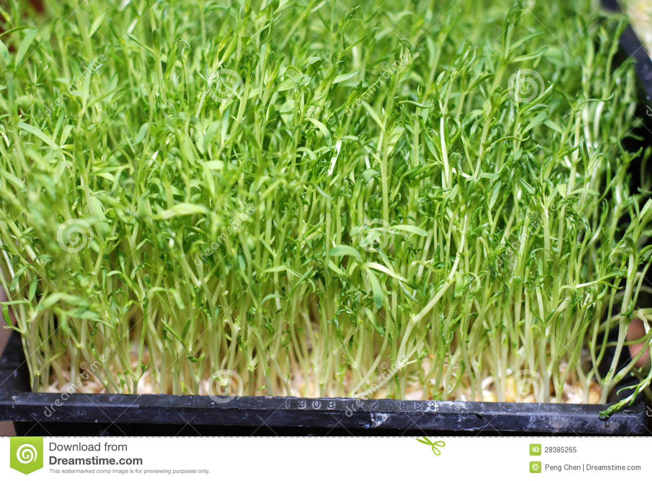 Green Food Mung Bean Sprout Royalty Free Stock Photo - Image: 28385265
