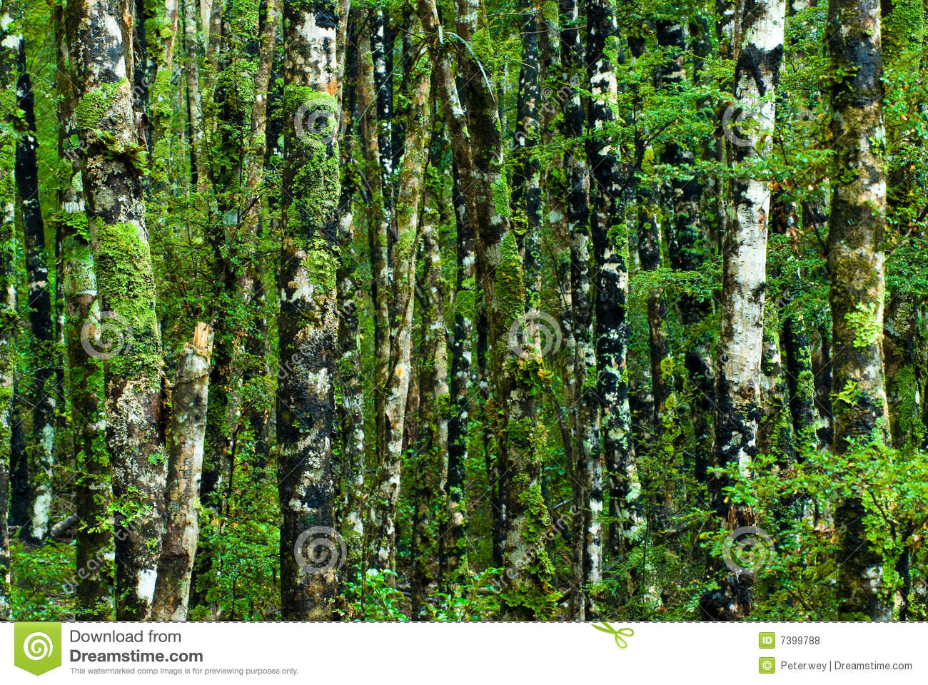 Green Forest Background Stock Photo Image Of Nelson Texture 7399788