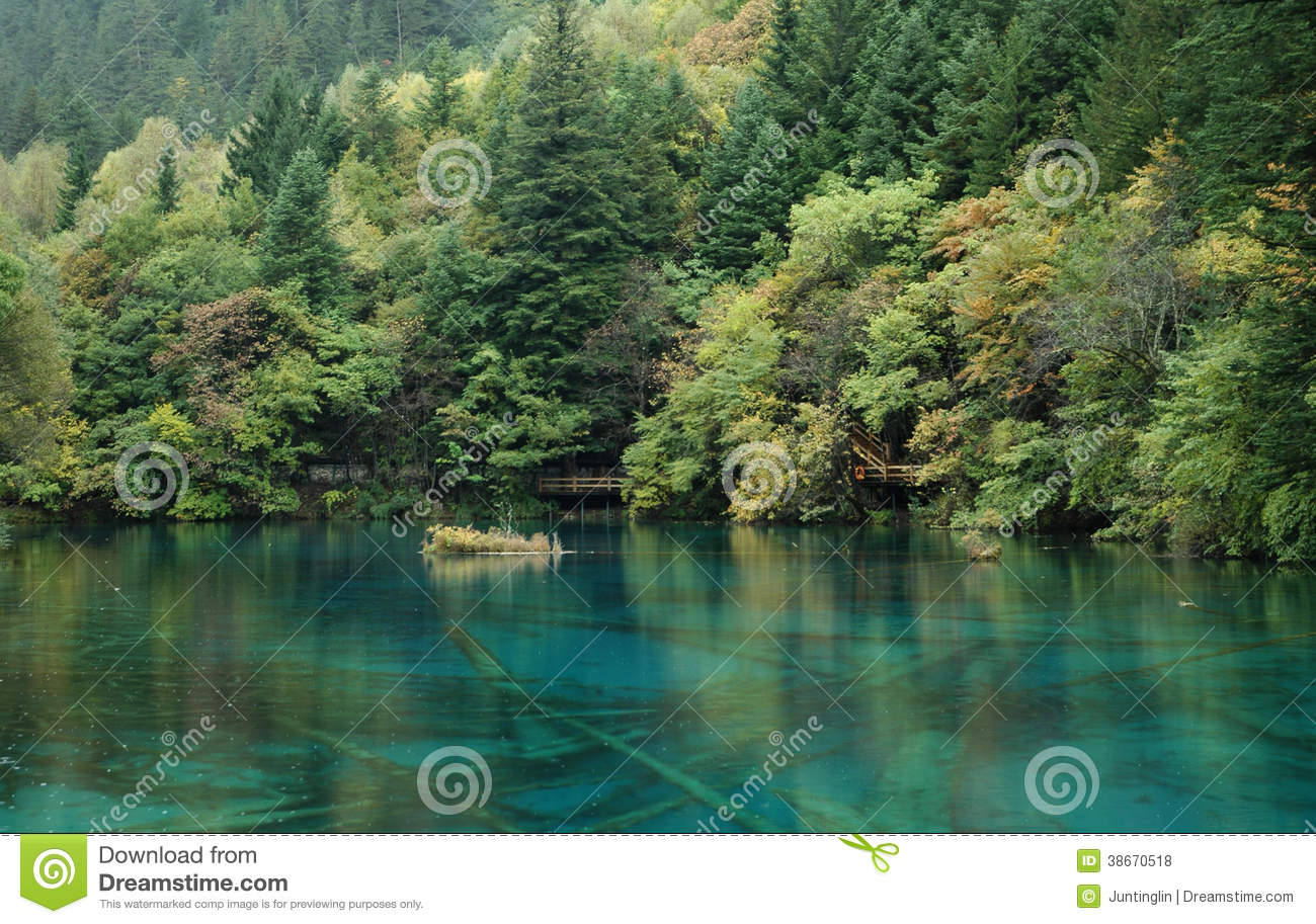 Green Forest With A Clean Blue Lake Royalty Free Stock