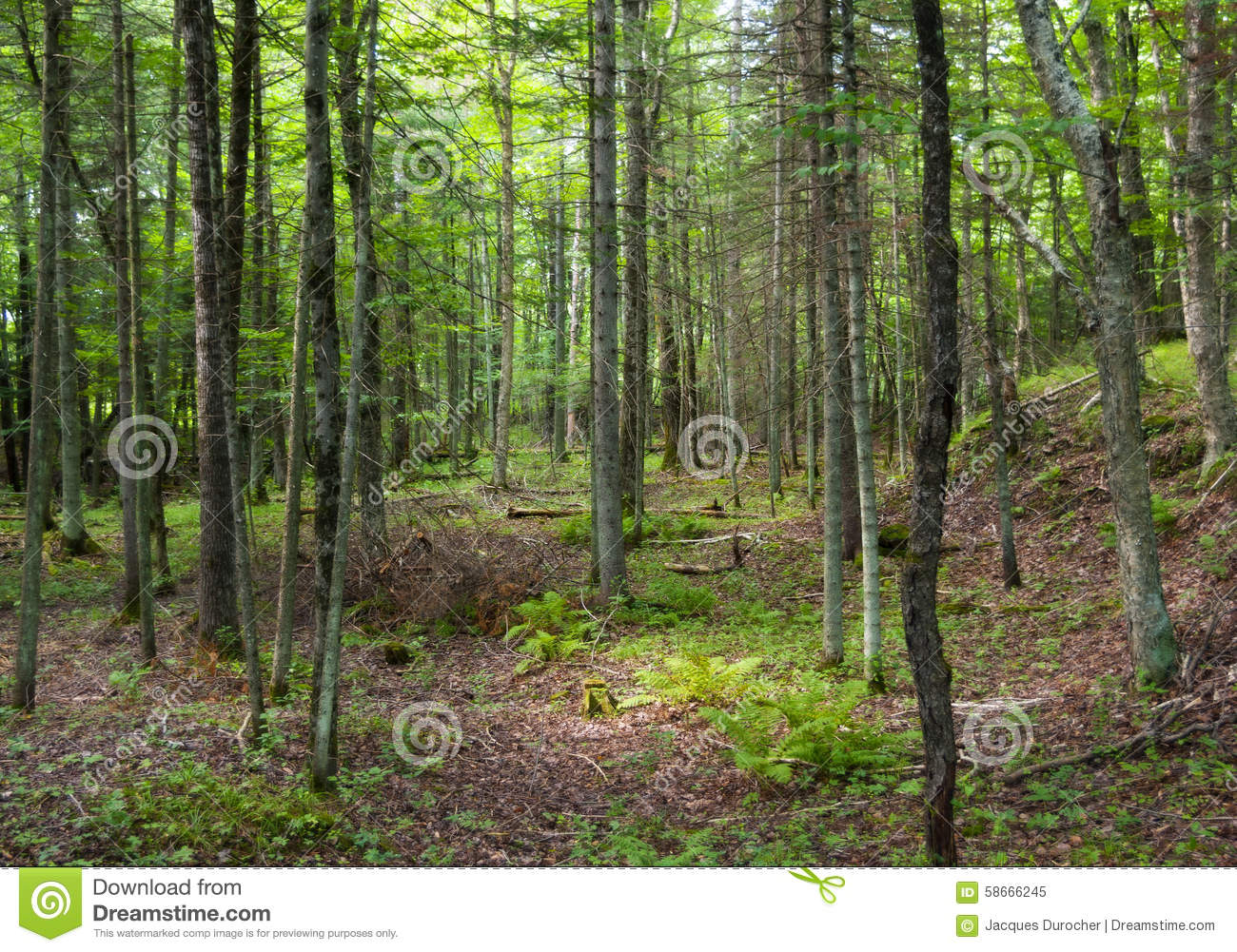 Green forest ecosystem Ecosystem