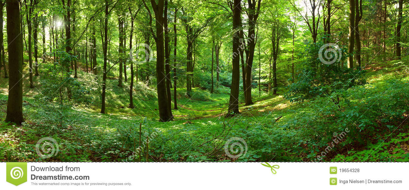 Green forest panorama