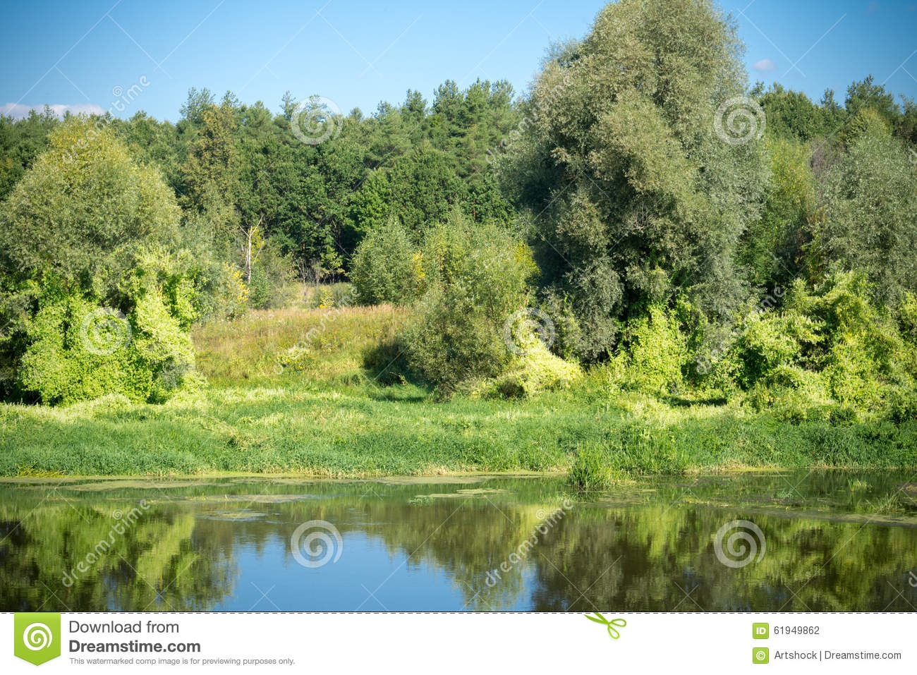 Green Forest And River Stock Photo. Image Of Natural