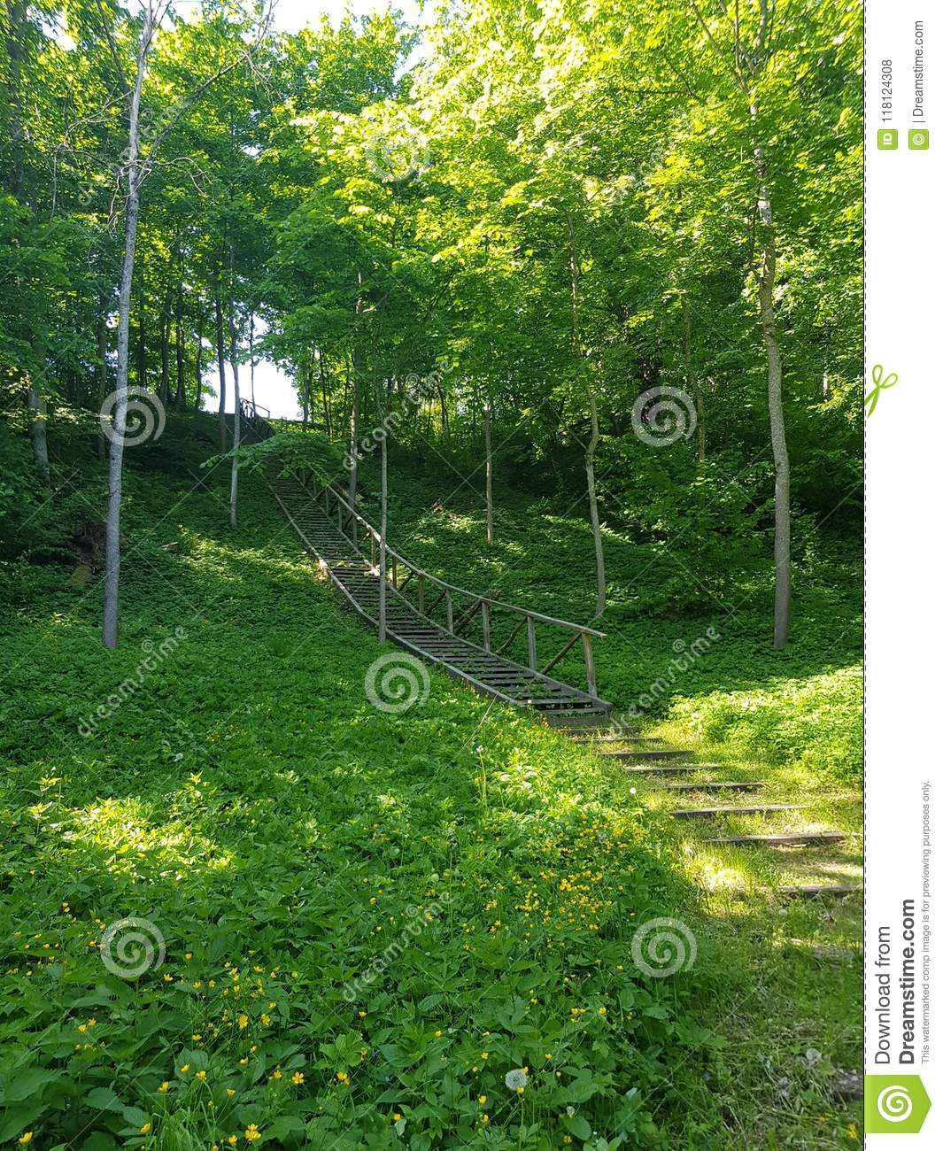 Green forest with stairs