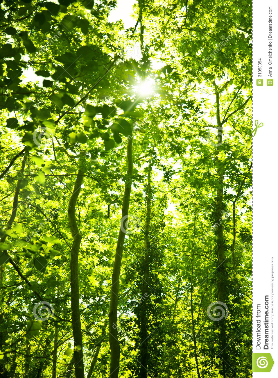 Green Forest Trees Background Stock Images Image 31053354