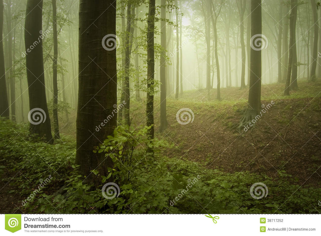 Green forest with vegetation and fog