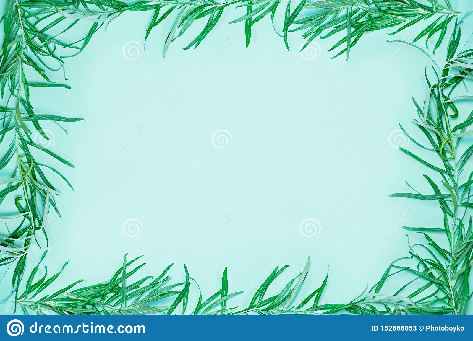 Green frame composed of fresh green branches and leaves. Background and copy space image symbolizing ecology, nature,