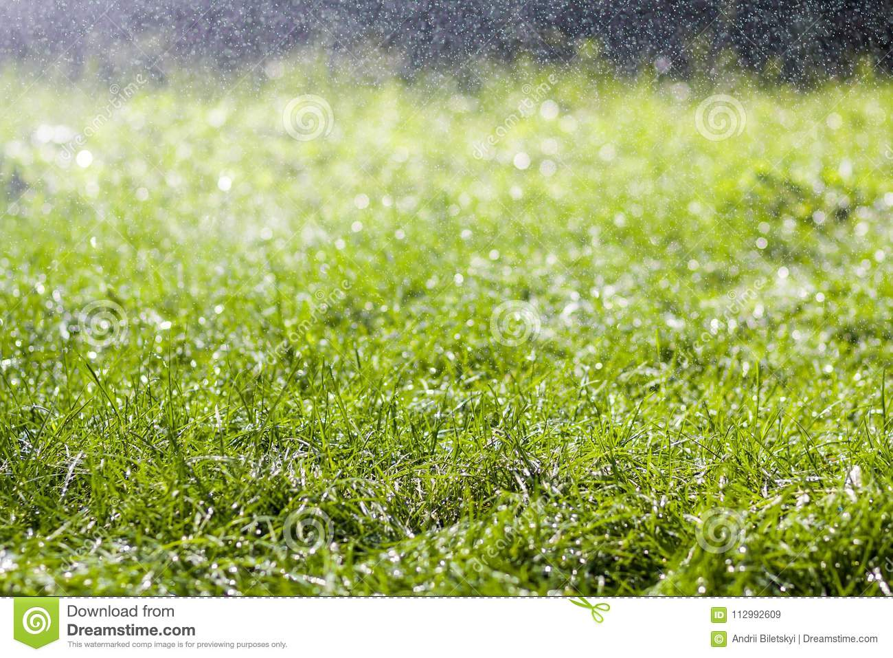Green fresh grass with falling drops of morning rain water. Beautiful summer background with bokeh and blurred background. Low dep