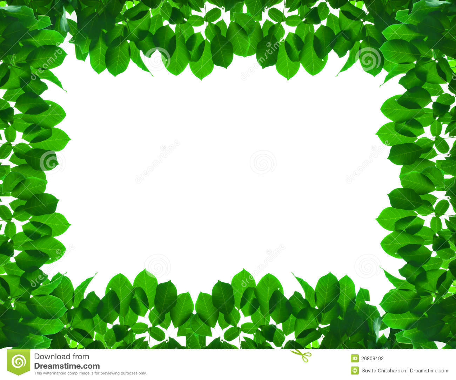 Green fresh leaf frame stock photography image 26809192 - Marcos para plantas ...