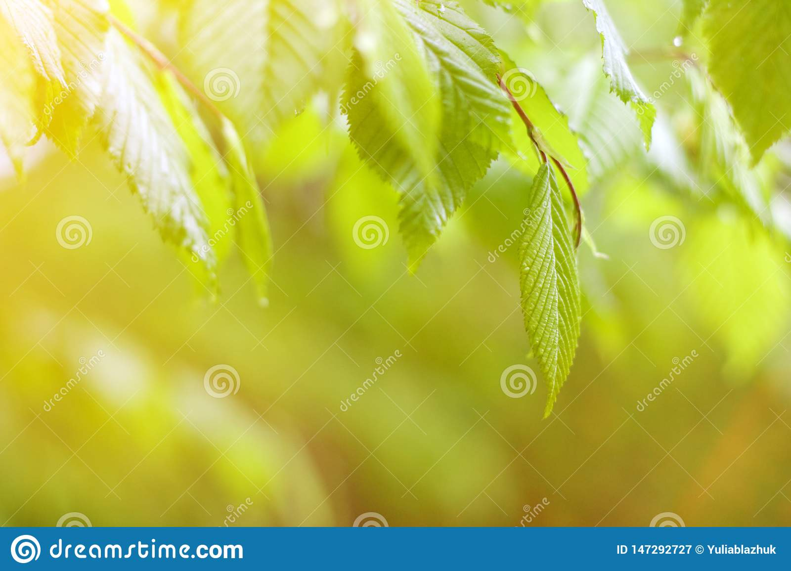 Green fresh leaves background in sunny day
