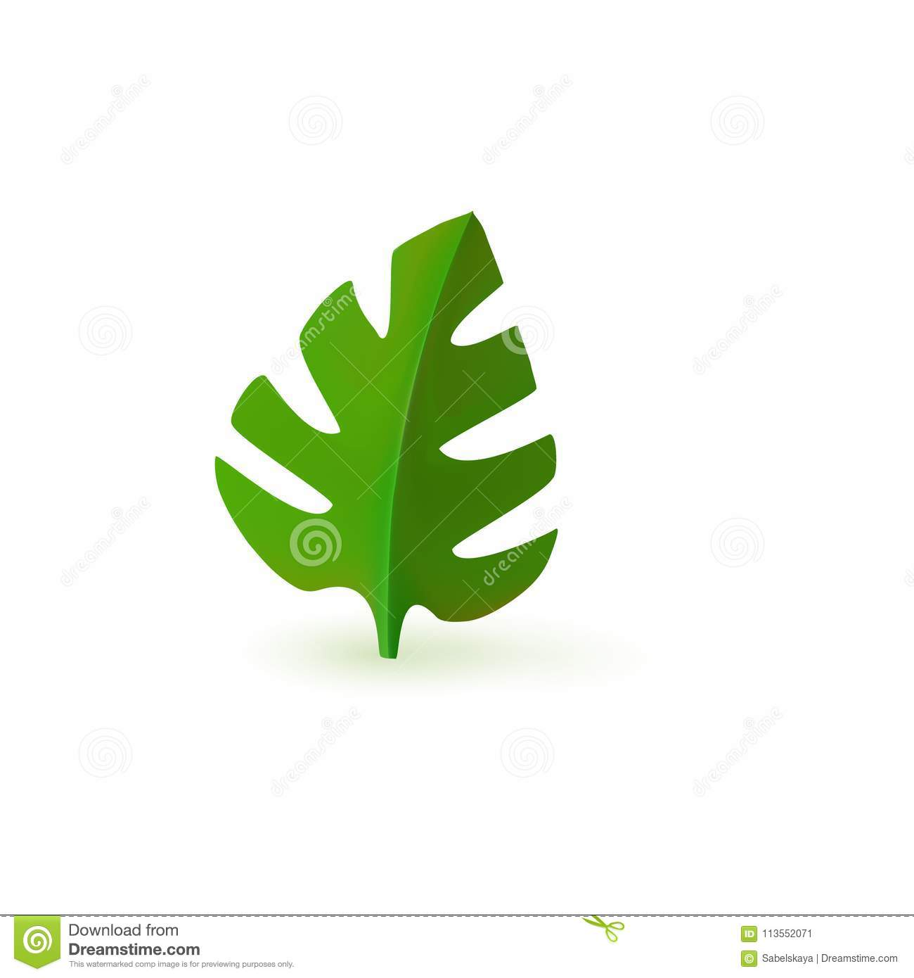 Green Fresh Monstera Leaf Isolated On White Background