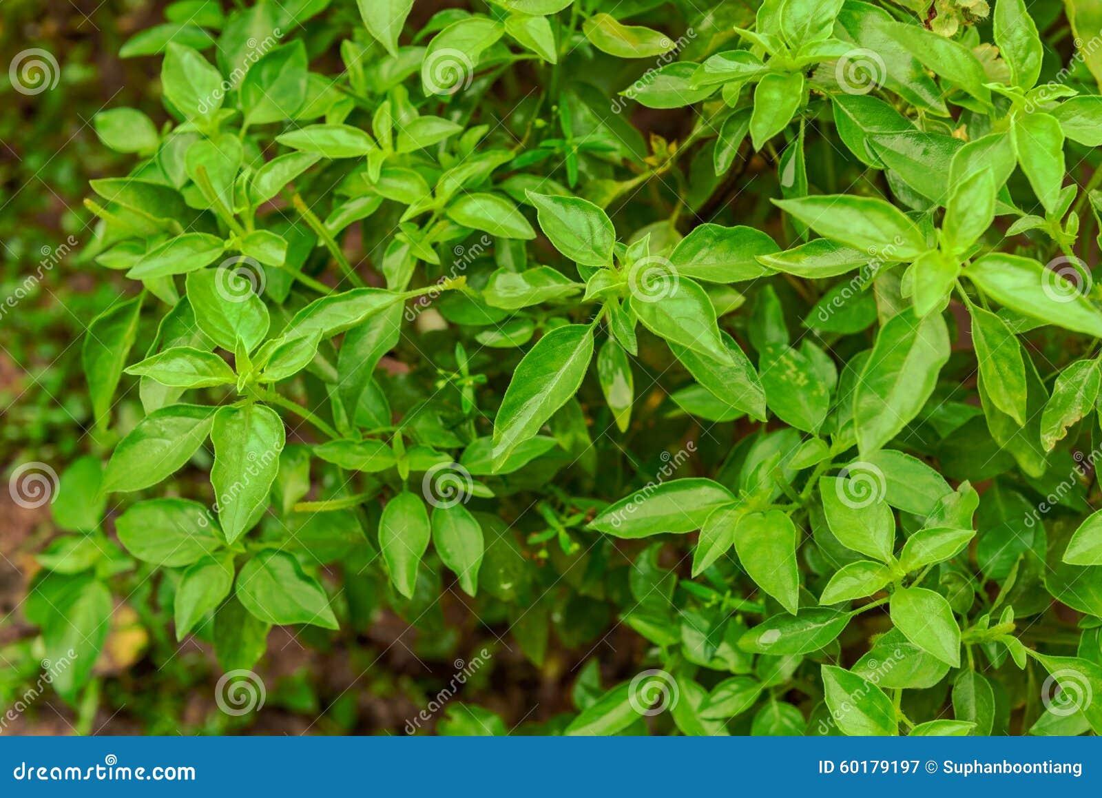 Green Leaves Teen Dreams 38