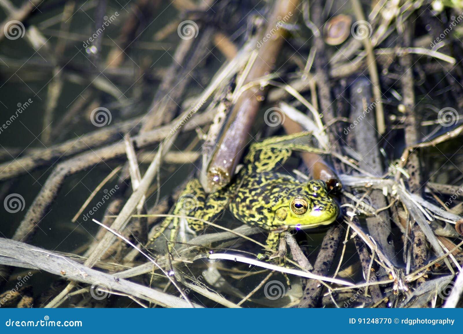 Green Frog Jump