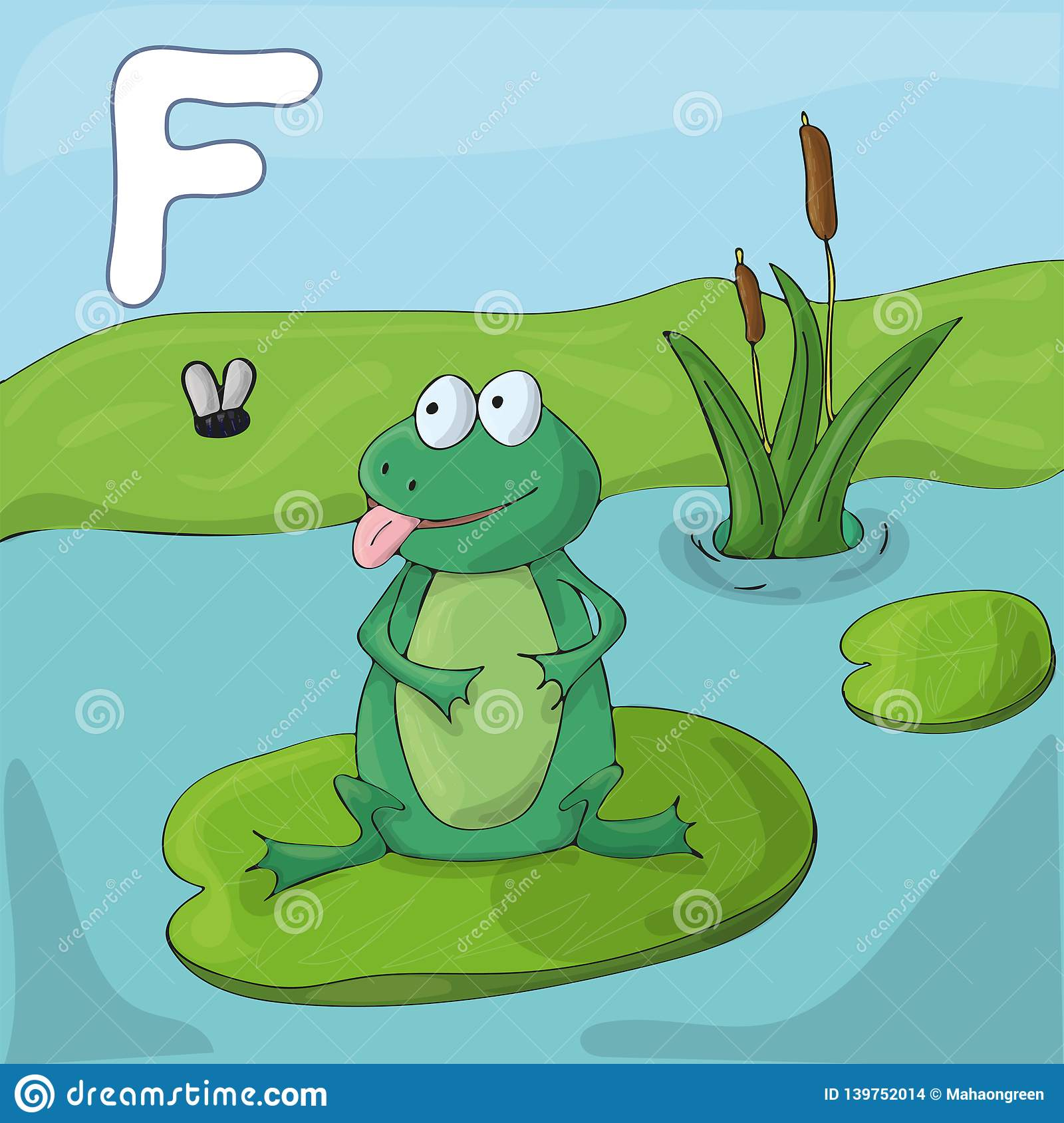 Green frog on a lake. Childrens illustrated alphabet. Letter F .