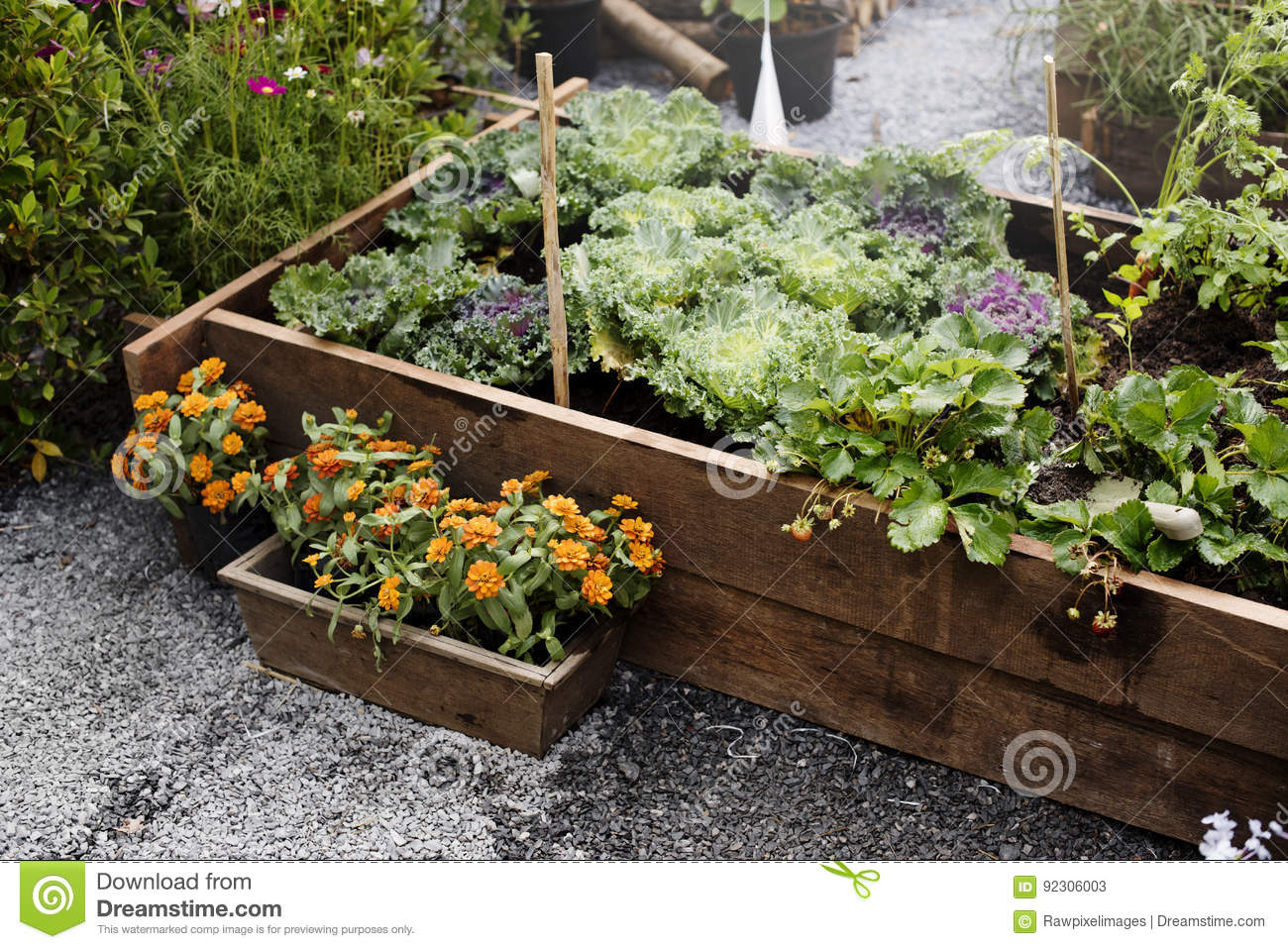 Green Garden Farming Vegetable Plants Stock Image - Image of growth ...