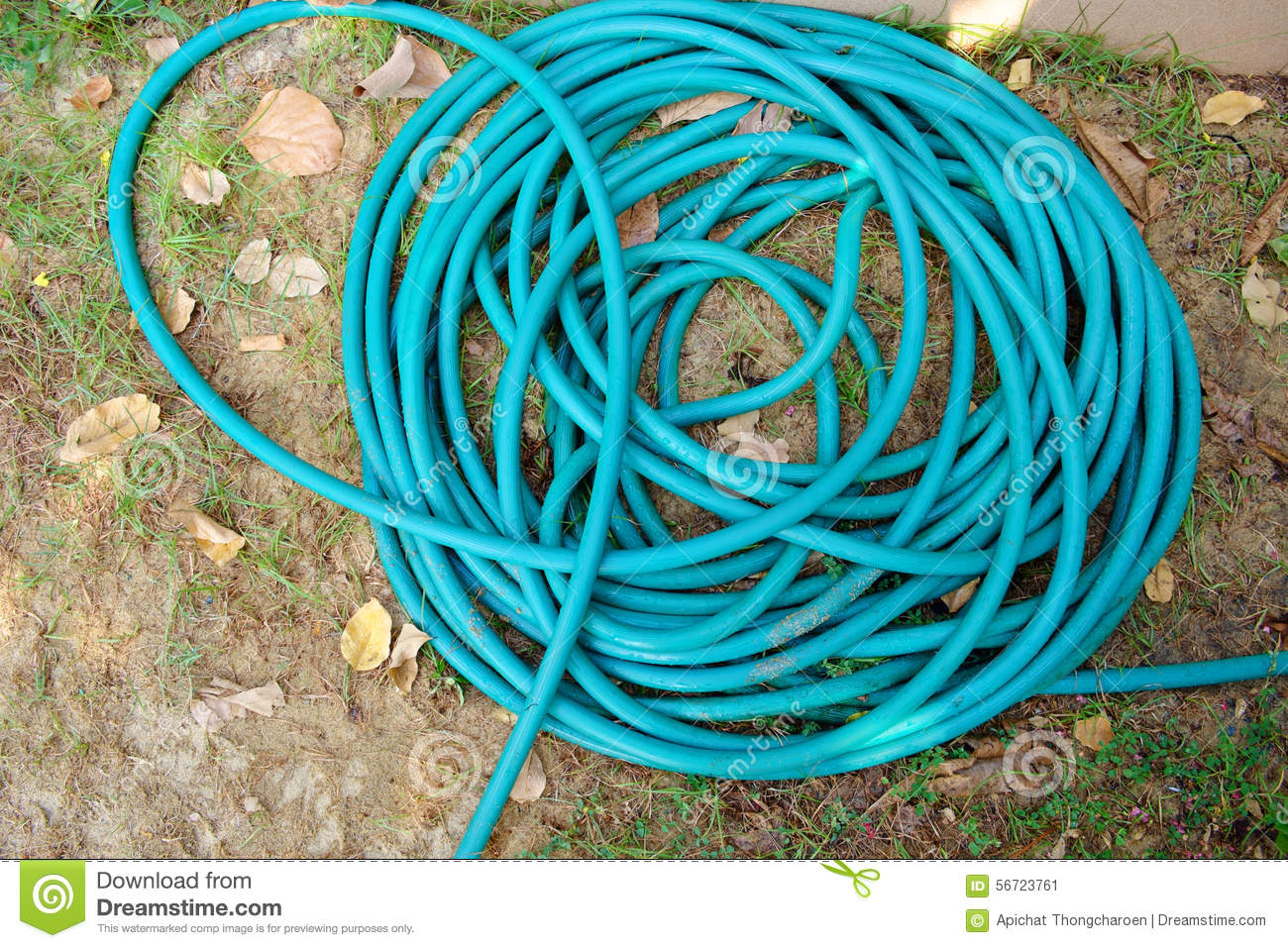 Green garden hose in a roll