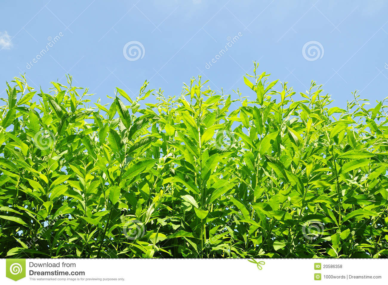 Green garden plants royalty free stock photos image for Green plants for landscaping