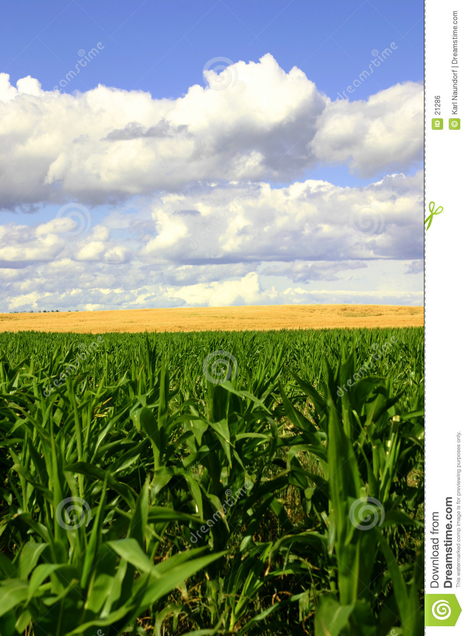 Green and Gold Fields, Blue Skies II