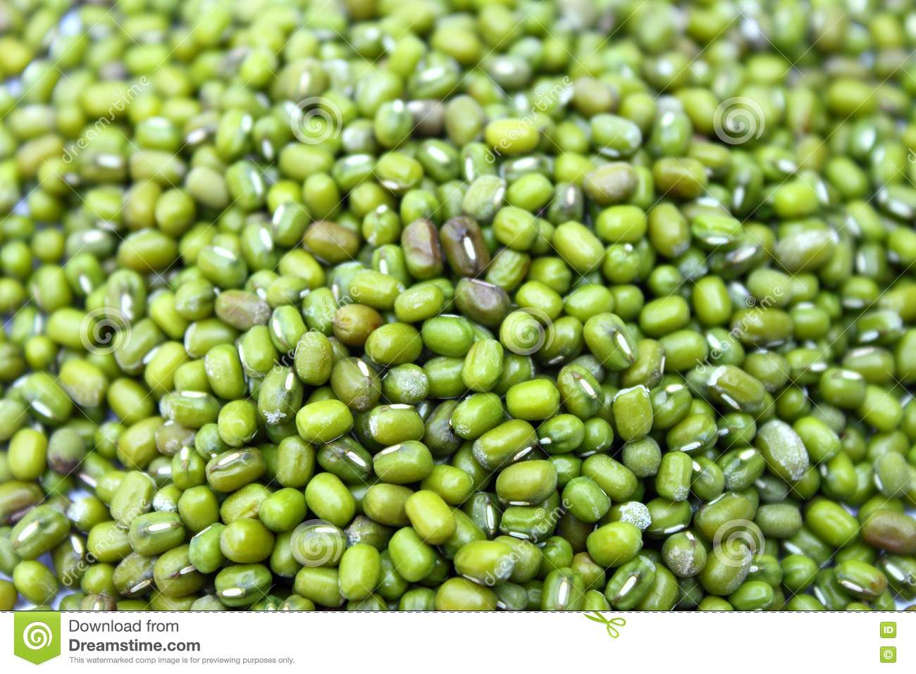 green gram stock photo  image of mineral  mung  plant